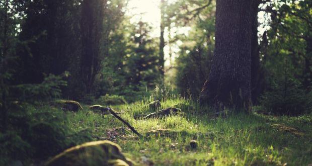 kalikasan, poem-about-nature