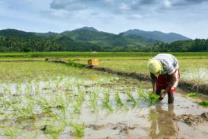farm philippines imee marcos